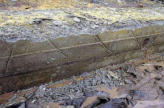 Коррозионная бетона грибы для бетона